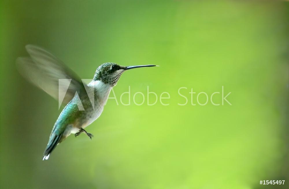 adobe stock uccello fringuello colibrì greenery